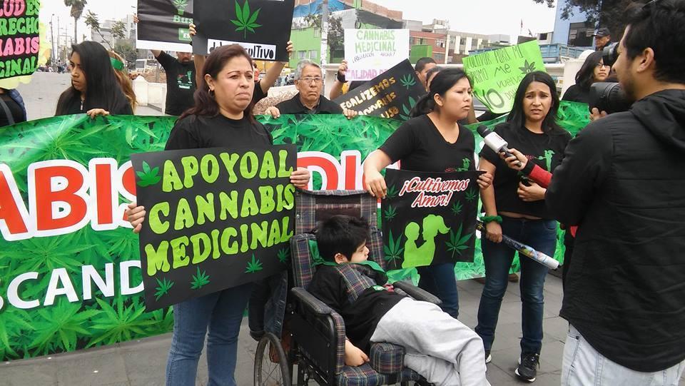 Argentina: Diputados Aprueban uso de cannabis en ciertos tratamientos