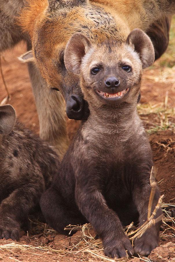 Insólitas sonrisas animales